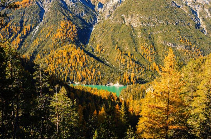Landschap van de Zwitserse Alpen en het bos van nationale parc in Zwitserland Alpen van Zwitserland op de herfst Parc Naziunal Sv stock afbeeldingen