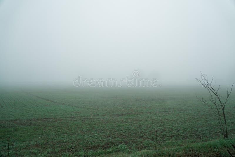 Landschap van dichte mist in het gebied en het silhouet van bomen in de warme winter stock afbeeldingen
