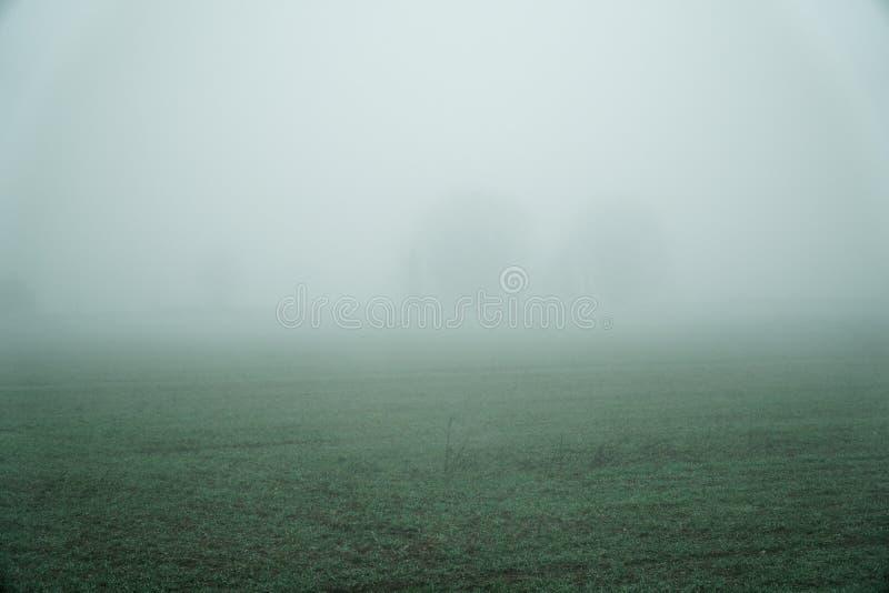 Landschap van dichte mist in het gebied en het silhouet van bomen in de warme winter stock foto's