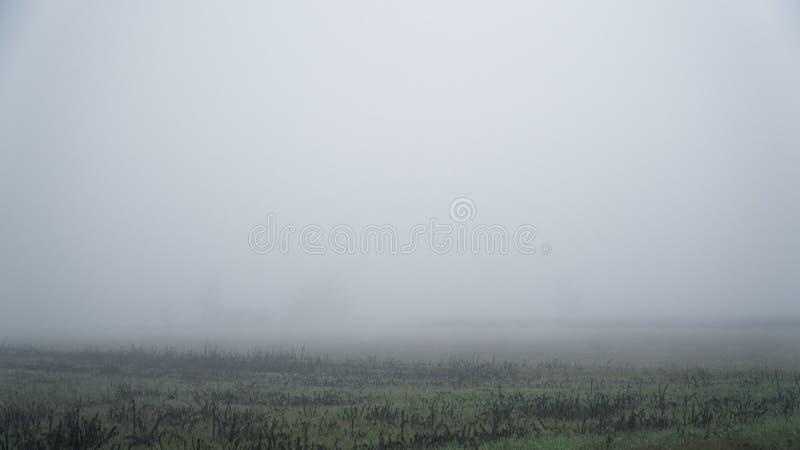 Landschap van dichte mist in het gebied en het silhouet van bomen in de warme winter stock foto