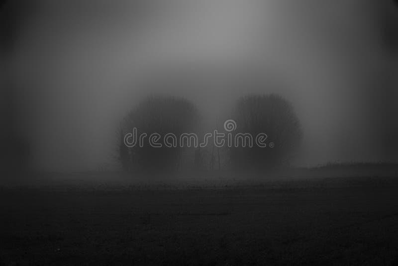 Landschap van dichte mist in het gebied en het silhouet van bomen in w royalty-vrije stock foto
