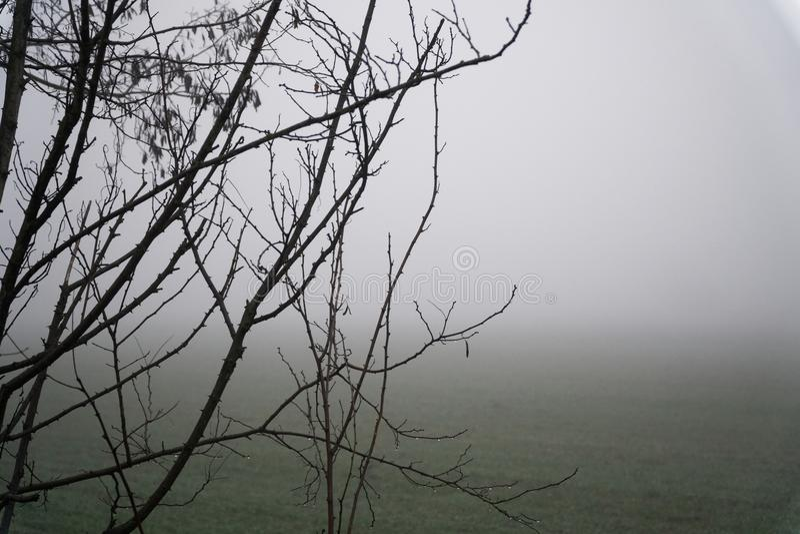Landschap van dichte mist in het gebied en het silhouet van boomboomstam in de warme winter stock afbeeldingen