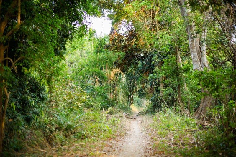 Landschap van Don Khone Laos stock afbeelding