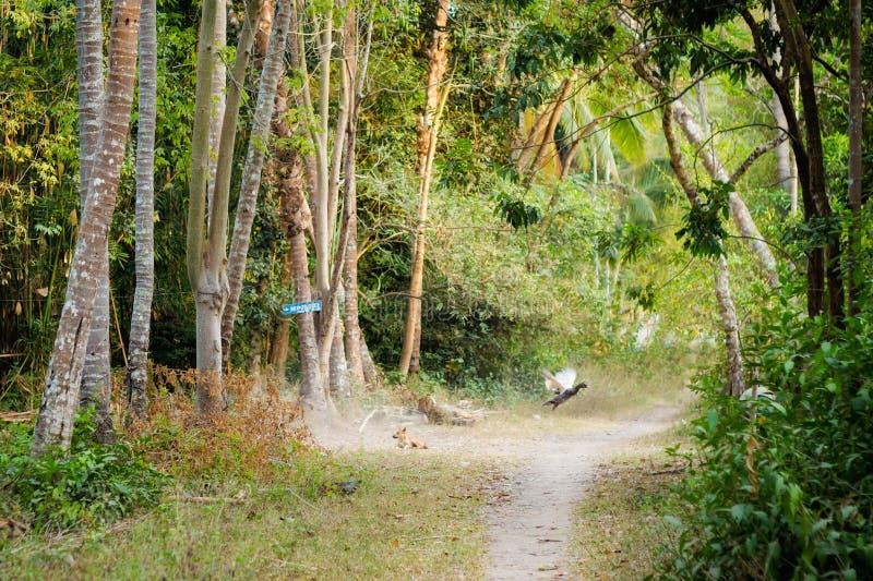 Landschap van Don Khone Laos royalty-vrije stock afbeelding