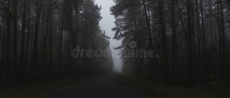 Landschap van donker bos in de mist, weg in een donker bos stock fotografie