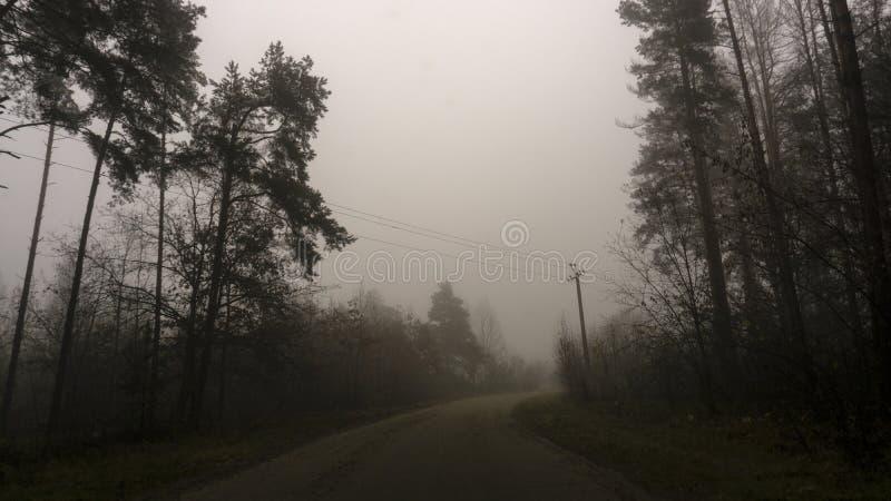 Landschap van donker bos in de mist, weg in een donker bos royalty-vrije stock foto's