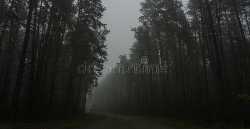Landschap van donker bos in de mist, weg in een donker bos stock foto's