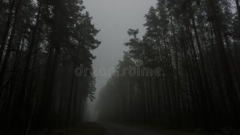 Landschap van donker bos in de mist, weg in een donker bos royalty-vrije stock fotografie