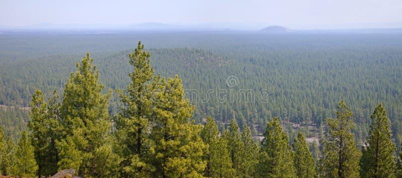 Landschap van een dicht bos in centraal Oregon royalty-vrije stock fotografie