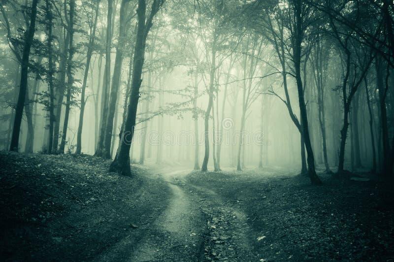 Landschap van een donker bos met mist royalty-vrije stock afbeeldingen