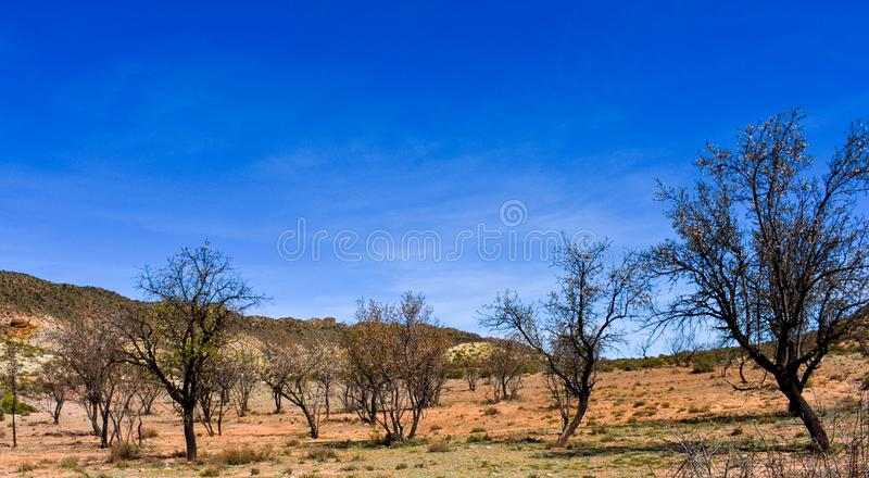 landschap van een landbouwlandbouwbedrijfbenutting van fruitbomen op een gebied De bomen worden verlaten en drogen bijna met vele royalty-vrije stock afbeeldingen