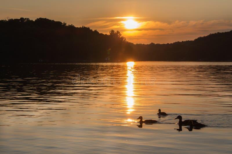 Landschap van een noordelijk meer bij zonsondergang met eenden