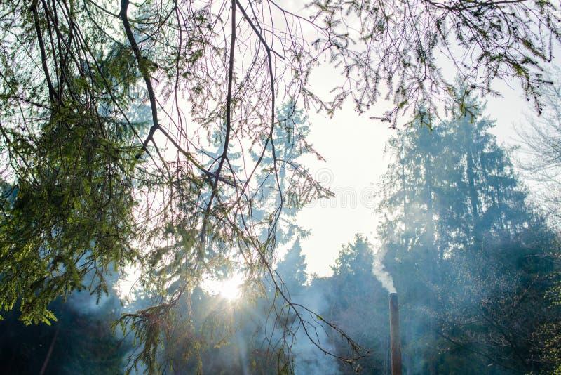 Landschap van geheimzinnigheid bos royalty-vrije stock fotografie
