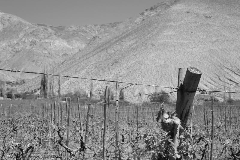 Landschap van gewassen in zwart-wit royalty-vrije stock foto