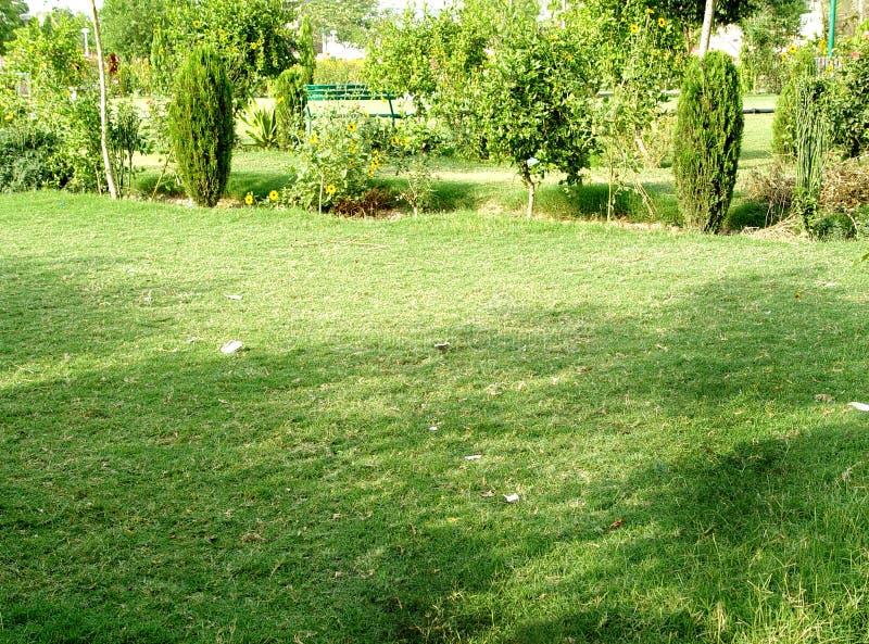 Landschap van grasgebied en groen milieu openbaar park stock fotografie