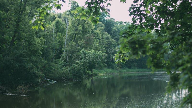 Landschap van grasgebied en het groene gebruik van het milieu openbare park als natuurlijke achtergrond, achtergrond stock fotografie