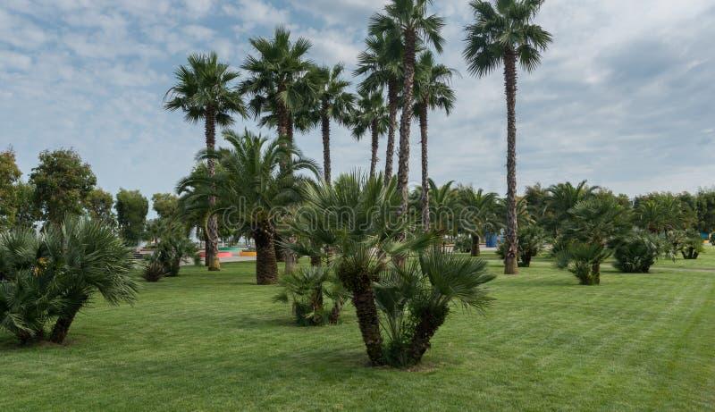 Landschap van groene grasgebied en palmen in stadspark royalty-vrije stock afbeelding
