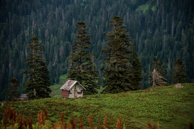 Landschap van het blokhuis die zich op de heuvel in backgrpund van altijdgroen bos bevinden stock fotografie