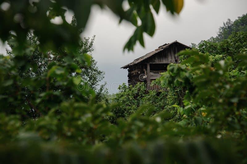 Landschap van het blokhuis die zich tussen de groene boomtakken bevinden royalty-vrije stock afbeelding