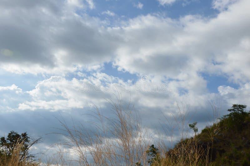 Landschap van het gebied die van de grasbloem van wind op de berg van Khao Lon in Thailand blazen stock fotografie