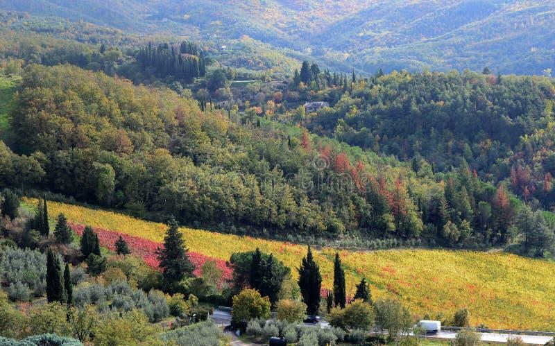 landschap van het platteland dichtbij Arezzo, Toscanië, met een kleurrijke wijngaard stock fotografie