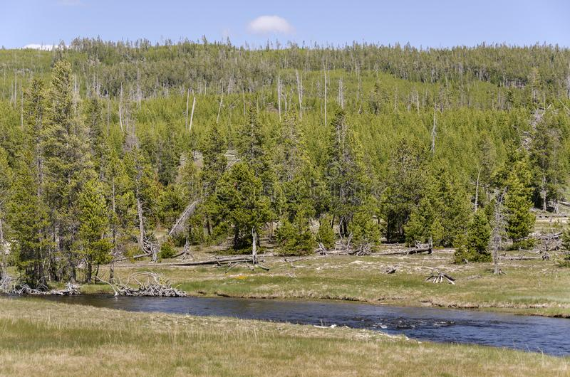Landschap van het Yellowstone het nationale park stock foto's
