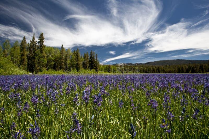 Landschap van het Yellowstone het Nationale Park royalty-vrije stock afbeeldingen