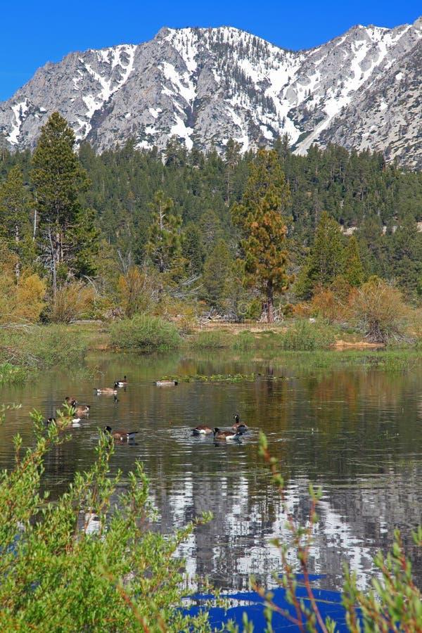 Landschap van Meer Tahoe in Californië stock afbeeldingen
