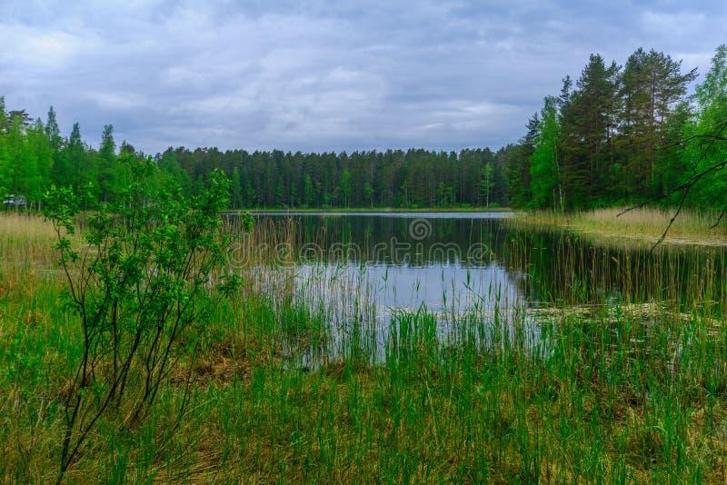 Landschap van meren en bos langs de Punkaharju-rand royalty-vrije stock foto's