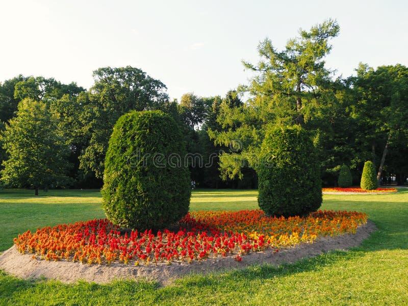 Landschap van in orde gemaakte ovale bomen die op een bloembed groeien van rode, oranje en gele bloemen in het park met illumin v stock foto