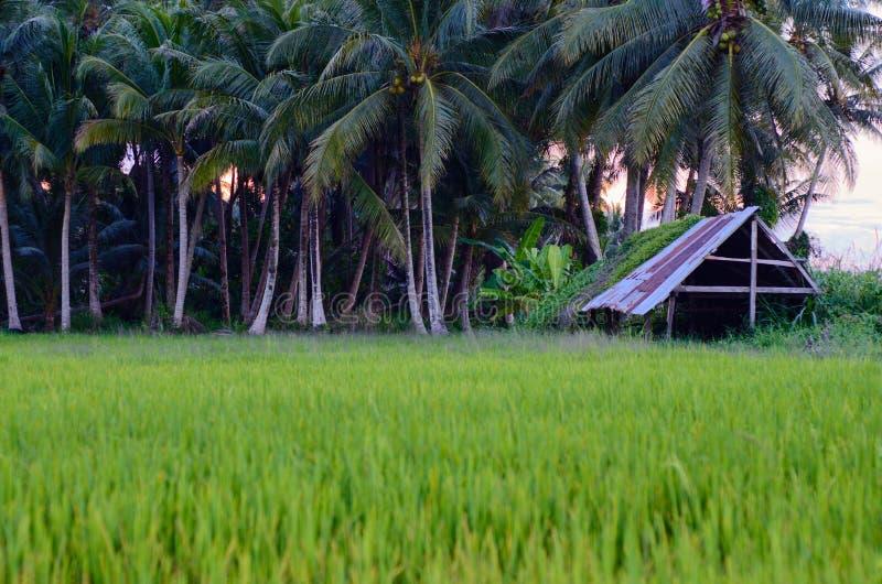 Landschap van padiegebied in kelantan, Maleisië stock afbeelding