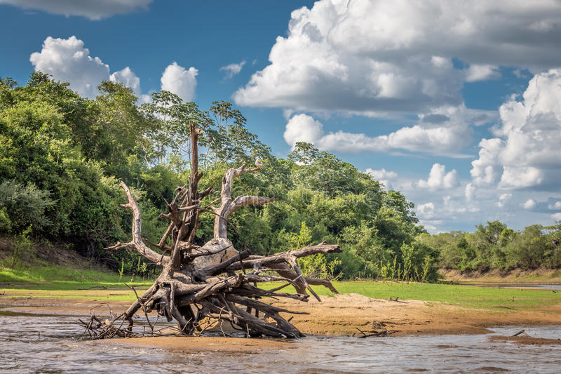 Landschap van Pantanal royalty-vrije stock fotografie