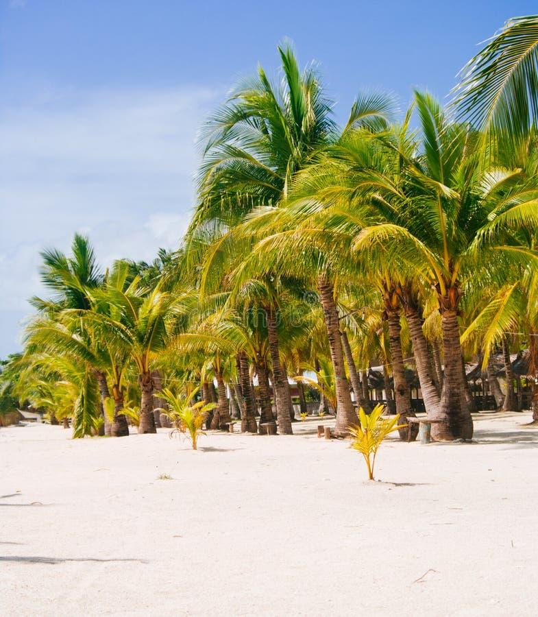 Landschap van paradijs tropisch eiland met palmen, plattelandshuisjes en wit zandstrand stock fotografie