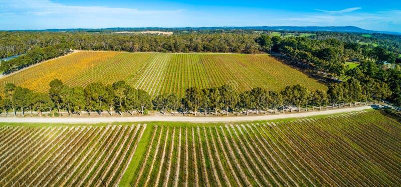 Landschap van rechte rijen van wijnstokken in een wijnmakerij royalty-vrije stock foto
