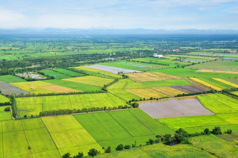Landschap van rijstaanplanting en weide op plattelandsgebied stock fotografie