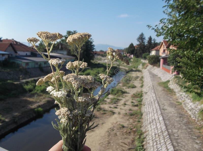 Landschap van rivier royalty-vrije stock fotografie