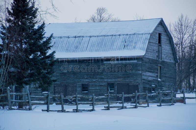 Landschap van sneeuw oude grijze gambrelschuur met ijskegels stock foto's
