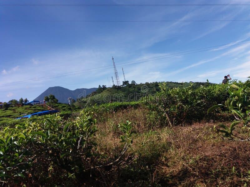 Landschap van theeaanplanting in Bogor, Indonesië royalty-vrije stock fotografie