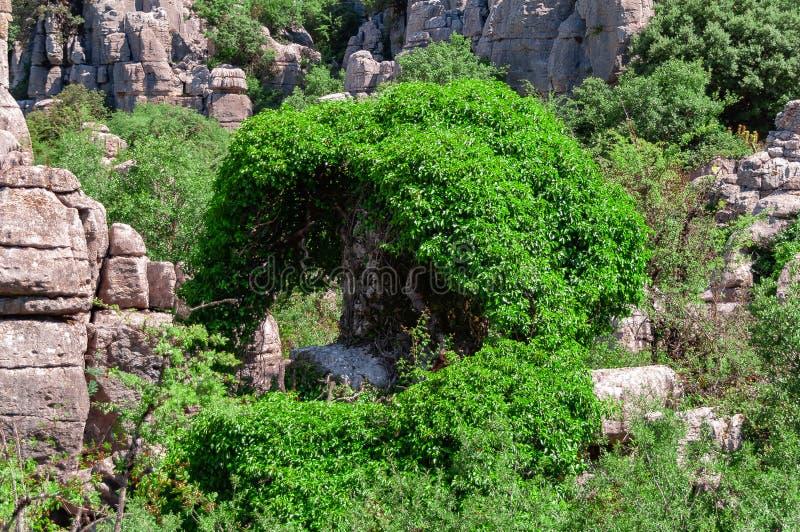 Landschap van Torcal DE Antequera royalty-vrije stock fotografie