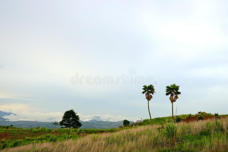 Landschap van twee suikerpalmen en houten plattelandshuisje royalty-vrije stock foto