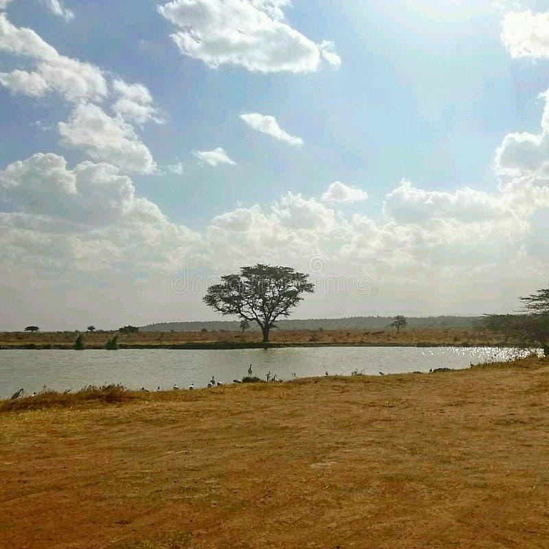 Landschap van waterlichaam in het midden van het park stock afbeeldingen