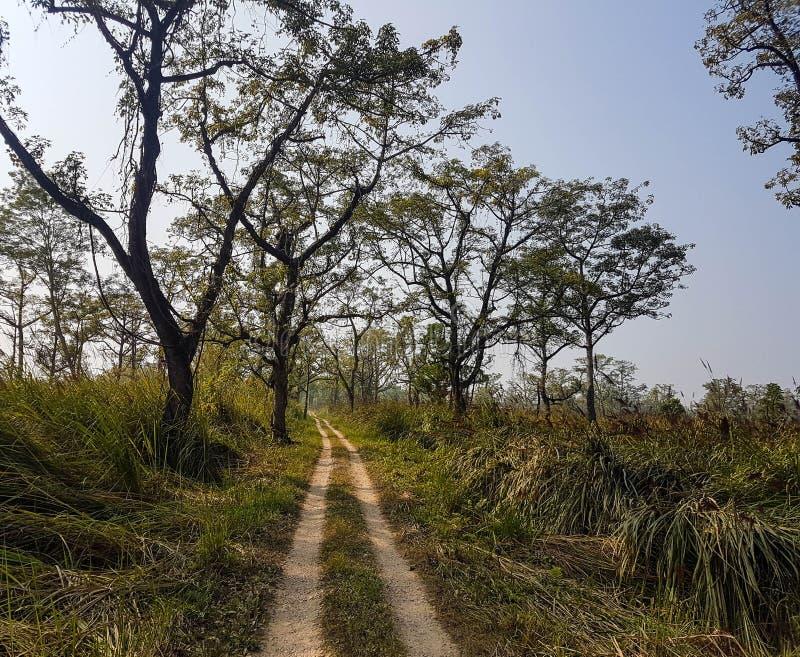 Landschap van wildernissen in het Nationale Park van Chitwan, Nepal royalty-vrije stock afbeeldingen