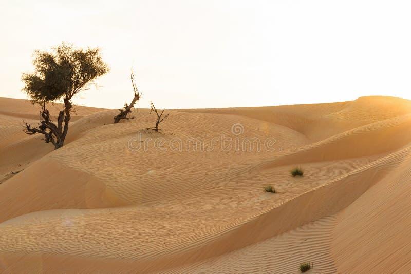 Landschap van zandduinen in woestijn gezien de het plaatsen zon royalty-vrije stock afbeeldingen