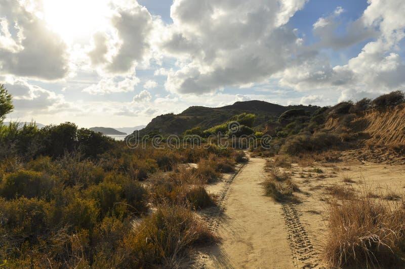 Landschap van zandige duinen met groene flora stock afbeelding