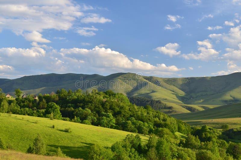 Landschap van Zlatibor-Berg royalty-vrije stock fotografie