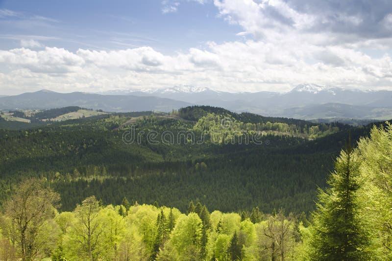 Landschap van zonnige dag in bosberg Karpatisch, de Oekraïne royalty-vrije stock afbeeldingen