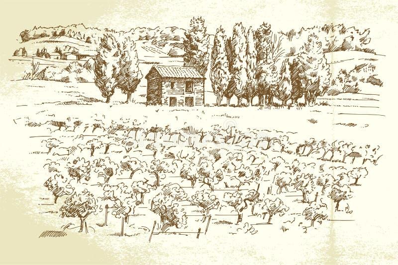 Landschap, wijngaard stock illustratie