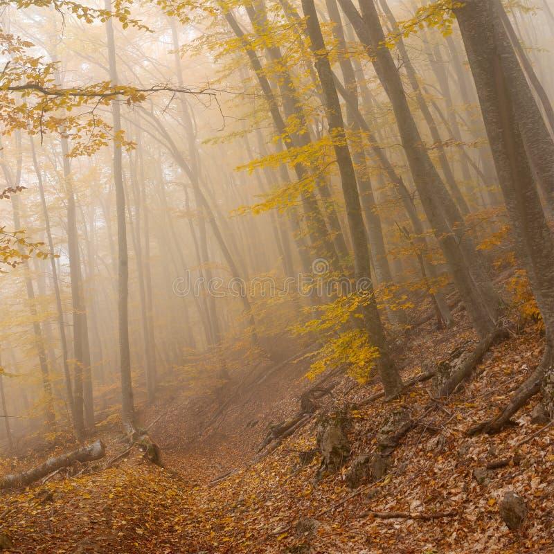 Landschap in wild mistig bos stock fotografie