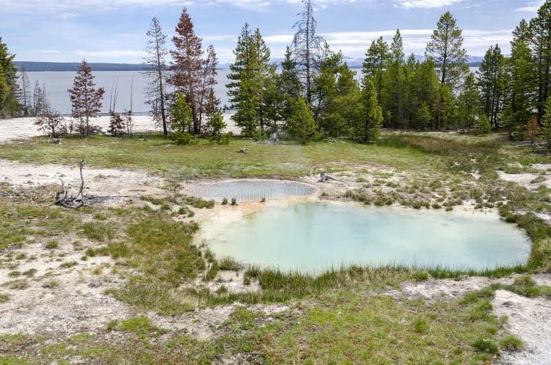 Landschap in Yellowstone stock foto's