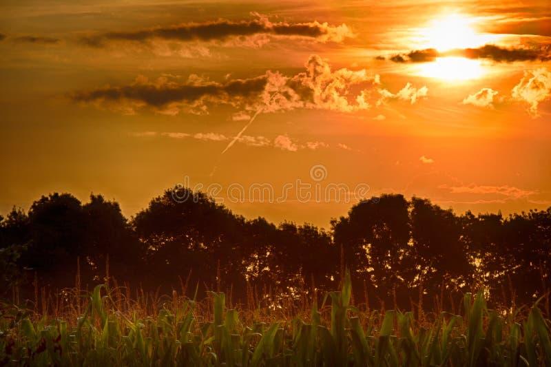 Landschappen bij dageraad met zonsopgang op het graangebied royalty-vrije stock afbeeldingen